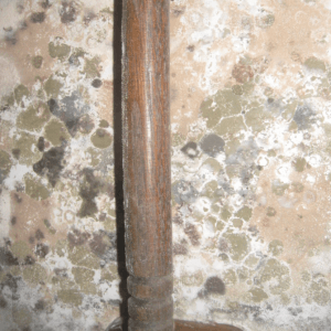 Black Mold Removal Chicago Mold Removal