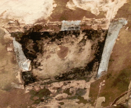 Mold Remediation Chicago Mold Removal