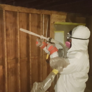 Mold Removal Chicago Mold Remediation