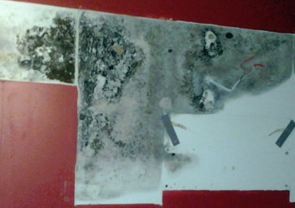 Mold Testing Chicago Mold Removal